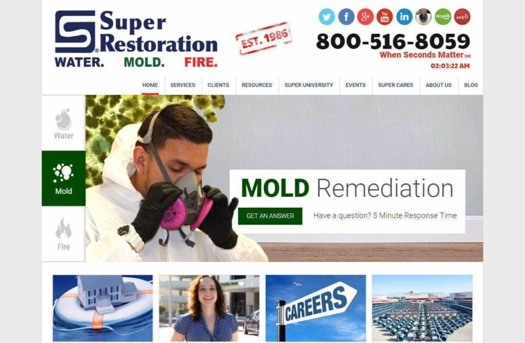 mold damage website design